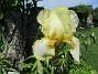 Iris (2021-06-02 Iris_0004)