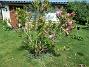 Magnolia (2021-06-02 Magnolia_0006)