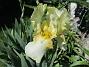 Iris                                 2021-06-03 Iris_0056