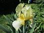 Iris                                 2021-06-03 Iris_0057
