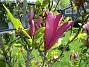 (2021-06-03 Magnolia_0050)