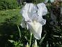 Iris                                 2021-06-04 Iris_0001