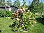 Magnolia                                 2021-06-04 Magnolia_0025