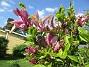 Magnolia                                 2021-06-04 Magnolia_0030