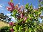Magnolia                                 2021-06-04 Magnolia_0031
