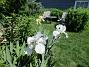 Iris                                 2021-06-07 Iris_0091