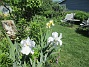 Iris                                 2021-06-07 Iris_0092