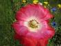 2006-07-21 Bild 038  2006 2006-07-21 Bild 038
