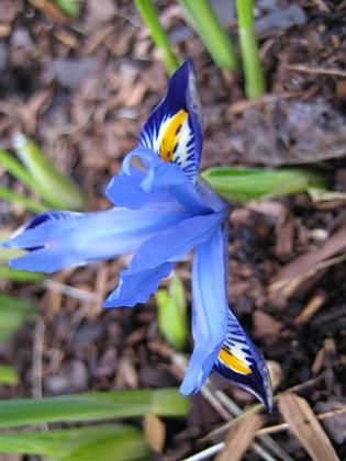Iris &nbsp 2007 2007-03-11 Bild 007 Granudden Färjestaden Öland