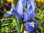 Iris  2007 2007-03-17 Bild 017