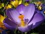 (2007 2007-03-24 Bild 009)
