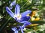 Vårstjärna  2007 2007-04-06 Bild 018