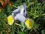 Iris  2007 2007-06-10 Bild 022