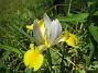 Iris  2007 2007-06-10 Bild 036