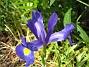 Iris  2007 2007-06-10 Bild 039