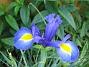 Iris  2007 2007-06-10 Bild 063