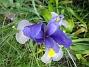 Iris  2007 2007-06-10 Bild 064