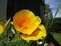 Sömntuta  2007 2007-06-20 Bild 040