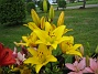 Liljor  2007 2007-07-09 Bild 007