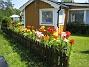 Liljor  2007 2007-07-18 Bild 032