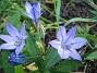 Okänd men vacker!  2007 2007-07-18 Bild 053