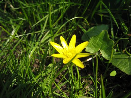 Okänd växt (ogräs?) &nbsp 2008 2008-04-26 Bild 126 Granudden Färjestaden Öland