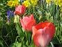 (2008 2008-04-26 Bild 034)