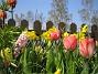 (2008 2008-04-26 Bild 038)