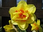 (2008 2008-04-26 Bild 074)