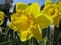 (2008 2008-04-26 Bild 077)