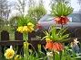 Kejsarkrona i tre färger.  2008 2008-05-01 Bild 015