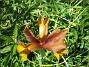 Iris  2008 2008-06-15 Bild 013
