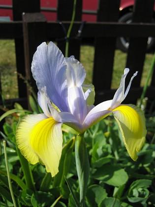 Iris  Favs 2006-06-18 Bild 005 Granudden Färjestaden Öland
