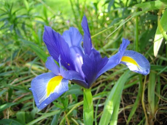Iris &nbsp Favs 2007-06-10 Bild 034 Granudden Färjestaden Öland
