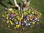 Krokus  Favs 2007-03-24 Bild 002