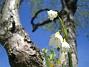 Sommarsnöklocka  Favs 2007-05-05 Bild 024