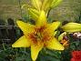 Liljor 2011-07-13 IMG_0029