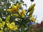 Liljor 2011-07-13 IMG_0122