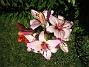 Liljor 2012-07-15 IMG_0012