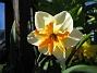 Narciss  2013-05-04 IMG_0006