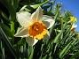 Narciss  2013-05-04 IMG_0012