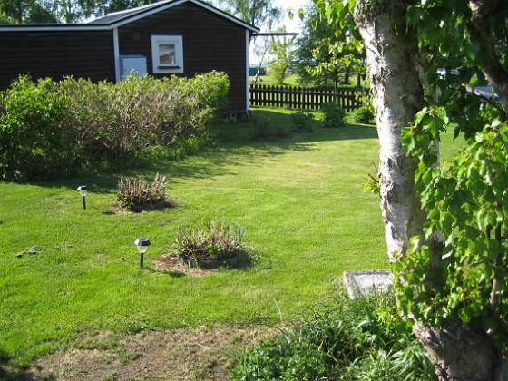 Hortensia &nbsp 2013-05-18 IMG_0033 Granudden Färjestaden Öland